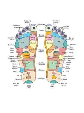 Reflexology Foot Map, Artwork by Peter Gardiner