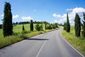 Cypress Trees Line Country Road, Chianti Region, Tuscany, Italy, Europe by Peter Groenendijk