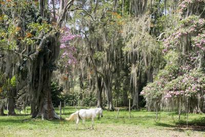 Dreamlike trees growing in the coffee region of Quindio UNESCO World Heritage Site, Colombia by Peter Groenendijk