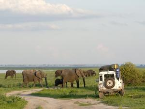 Group of Elephants and Landrover, Chobe National Park, Botswana, Africa by Peter Groenendijk