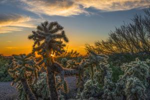 USA, Arizona, Tucson, Tucson Mountain Park by Peter Hawkins