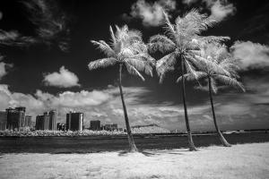 USA, Hawaii, Oahu, Honolulu, Palm trees on the beach. by Peter Hawkins