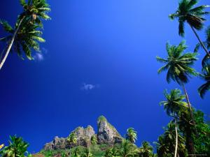 Palm Trees and Sky, Bora Bora, the Society Islands, French Polynesia by Peter Hendrie