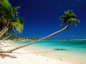 Palm Trees Leaning Towards Sea at Matautu Beach, Matautu, A'Ana, Upolu, Samoa by Peter Hendrie