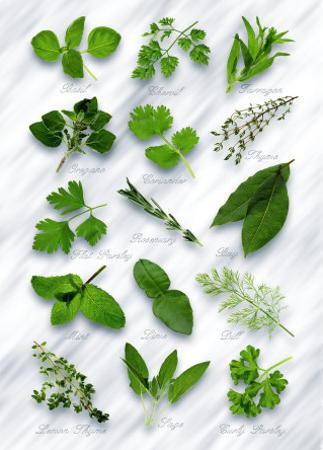 Various Herbs on Marble by Peter Howard Smith