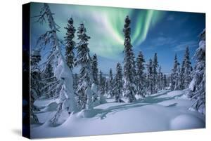 A Scenic View of a Snowy Forest with the Aurora Borealis Overhead by Peter Mather
