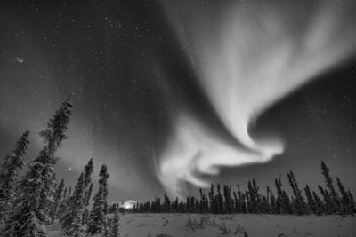 The Northern Lights, or Aurora Borealis, over a Boreal Forest by Peter Mather