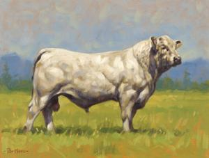 Charolais Bull by Peter Munro