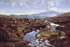 Stags by Peter Munro