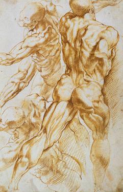 Anatomical Studies: Nudes in Combat by Peter Paul Rubens