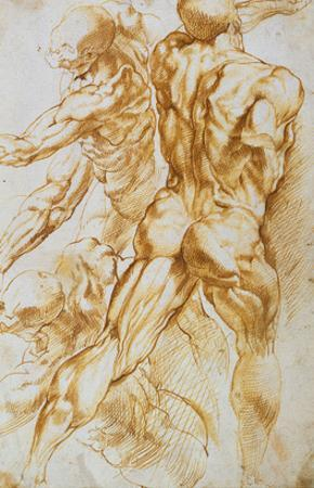 Anatomical Studies: Nudes in Combat by Peter Paul Rubens