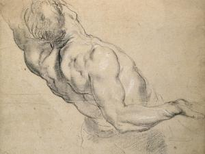 Study of a Nude Male Torso by Peter Paul Rubens