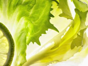 Endive with a Slice of Lime by Peter Rees