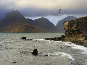 View to Cuillin Hills from Elgol Harbour, Isle of Skye, Inner Hebrides, Scotland, United Kingdom, E by Peter Richardson