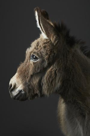 Stanley the Donkey by Peter Samuels