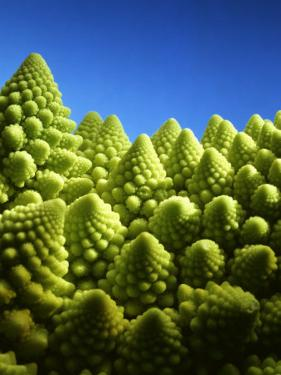 Close up of Romanesco by Peter Sapper