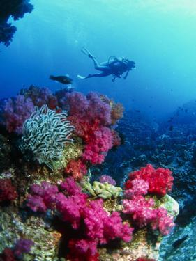 Soft Corals by Peter Scoones