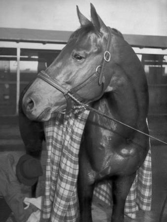 Championship Horse Seabiscuit Standing in Stall after Winning Santa Anita Handicap by Peter Stackpole