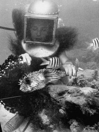 Diver Meddling Around with a Blowfish in Hartley's Underwater Movie in Bermuda by Peter Stackpole