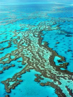 Great Barrier Reef, Queensland, Australia by Peter Walton