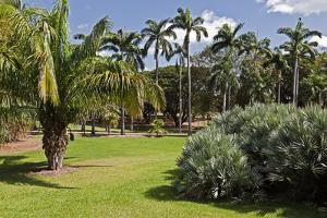Botanic Gardens, Darwin, Australia by Peter Walton Photography