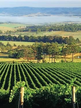Misty Morning in Yarra Valley Vineyards near Healesville, Victoria, Australia by Peter Walton Photography