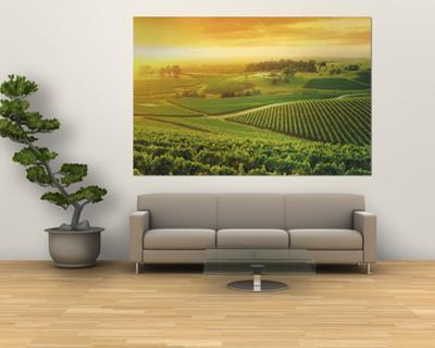Vineyard, Hunter Valley, Australia by Peter Walton
