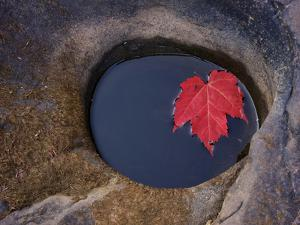 Michigan, Black River. Red Maple Leaf in a Small Lava Hole by Petr Bednarik