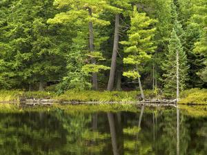 Michigan, Katherine Lake. Pine Trees Reflecting in a Small Lake by Petr Bednarik