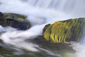 Michigan, Plantcovered Rocks in a Small Waterfall by Petr Bednarik