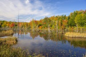 Michigan, Upper Peninsula. Small Pond with Colorful Background by Petr Bednarik