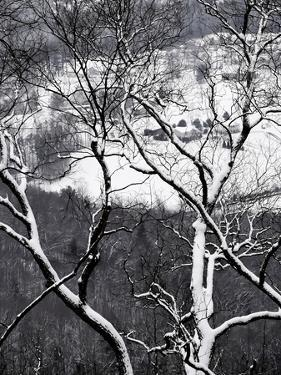 Farmland in the Valley Below, Seen Through Snow-Covered Tree Branches by Petteway White