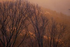 Sunlight from the Setting Sun Makes Ice Covered Trees Glow by Petteway White