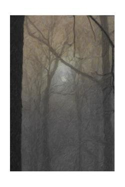 The Full Moon Shining Through Trees in a Photograph Processed to Look Like a Painting by Petteway White
