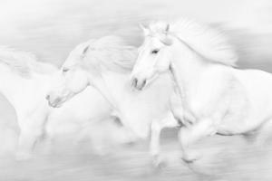 All the White Horses by PHBurchett