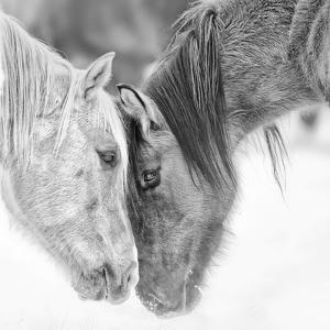 B&W Horses VII by PHBurchett