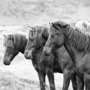 B&W Horses X by PHBurchett