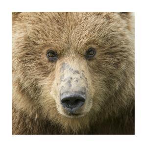 Bear Life I by PHBurchett
