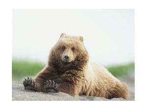 Bear Life VI by PHBurchett