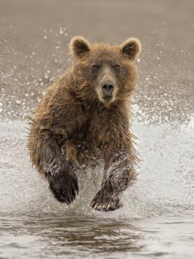 Bears at Play II by PHBurchett