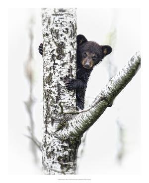 Bears at Play V by PHBurchett