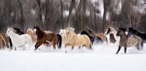 Snow Run II by PHBurchett
