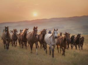 Sunkissed Horses II by PHBurchett