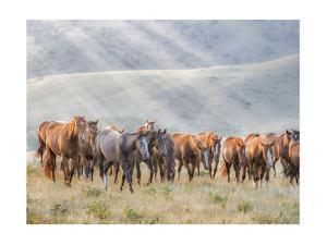 Sunkissed Horses III by PHBurchett