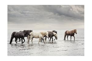 Water Horses IV by PHBurchett