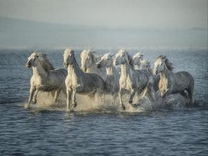 Water Horses VI by PHBurchett