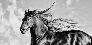 Wind Blown Mane IV by PHBurchett