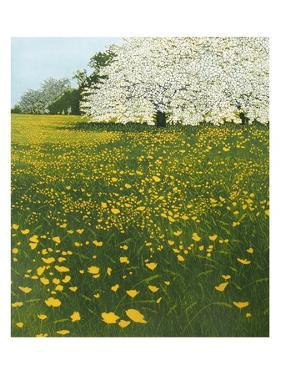 //2000 by Phil Greenwood