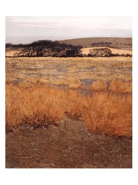 Burnt Moor by Phil Greenwood