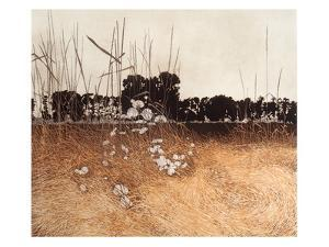 Coltsfoot by Phil Greenwood
